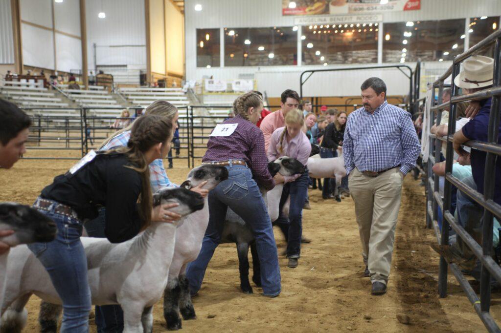 Market Lamb